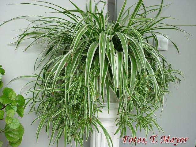 13 plantas que limpian el aire y que son f ciles de cuidar for Plantas de interior limpian aire
